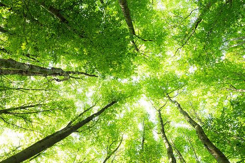 Natur Übersetzung